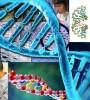 Polemik DNA Babi Dalam Makanan & Istihalah (Transformasi)